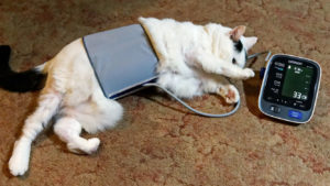 katze blutdruck messung Mark Turnauckas: How To Take Your Cat's Blood Pressure – CC BY 2.0